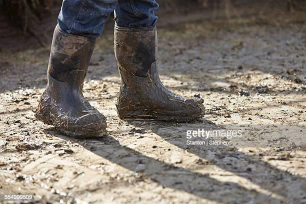 Legs of boy in muddy rubber boots in dairy farm yard