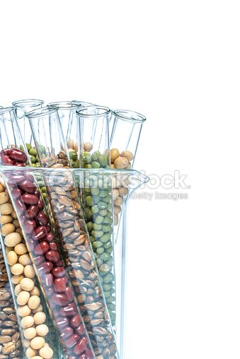 Legume With Wheat Genetically Modified Plant Cell Stock