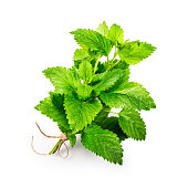 Lemon balm isolated on white background clipping path included. Fresh green melissa leaves with water drops