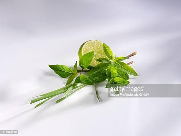 Lemon grass, pineapple sage, mint, lemon verbena & lime