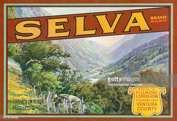 A lemon label for Selva Brand was issued circa 1930 in Los Angeles California