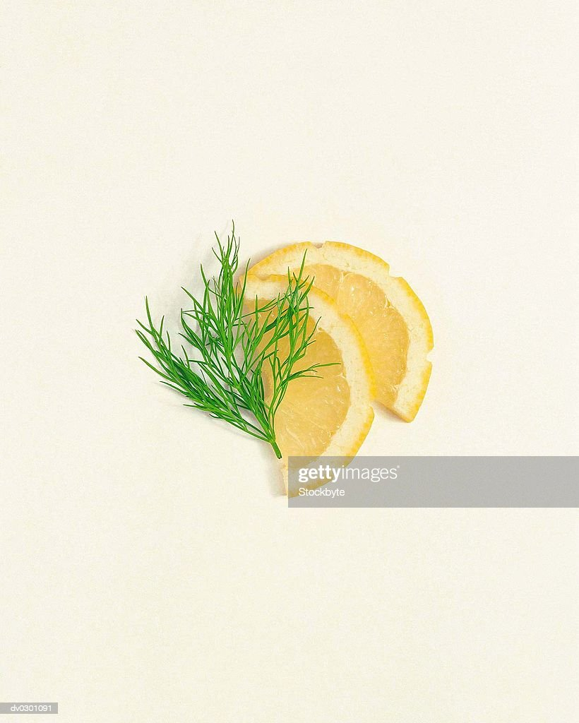 Lemon Slices with Dill : Stock Photo