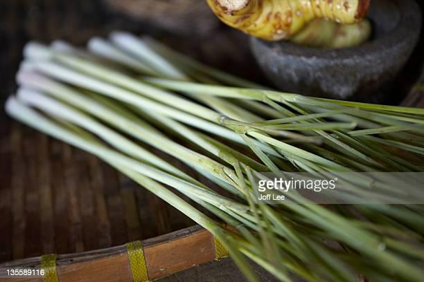 Lemongrass (Cymbopogon)