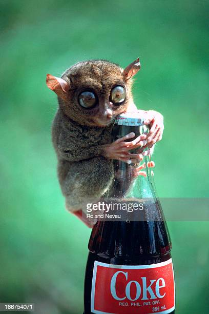 A lemur clings to a coke bottle