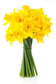bouquet of yellow lent lill (daffodil) isolated on white background.
