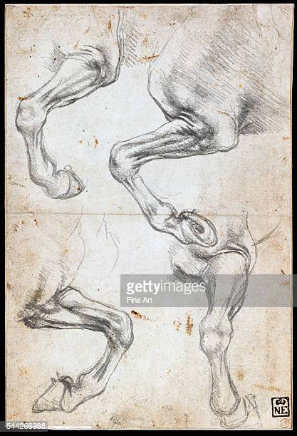 Leonardo da Vinci Studies of Horse's Leg 148595 black chalk on paper 213 x 145 cm Budapest Museum of Fine Arts