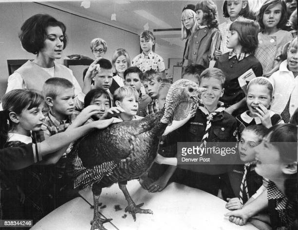 Leonard's Center of AttentionEarly Leonard the turkey has been strutting and gobbling to a tape recorder for more than a week in Mrs Carsten left...