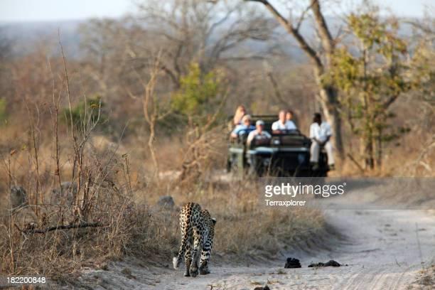 Leopard Wenn ein Spiel wagen