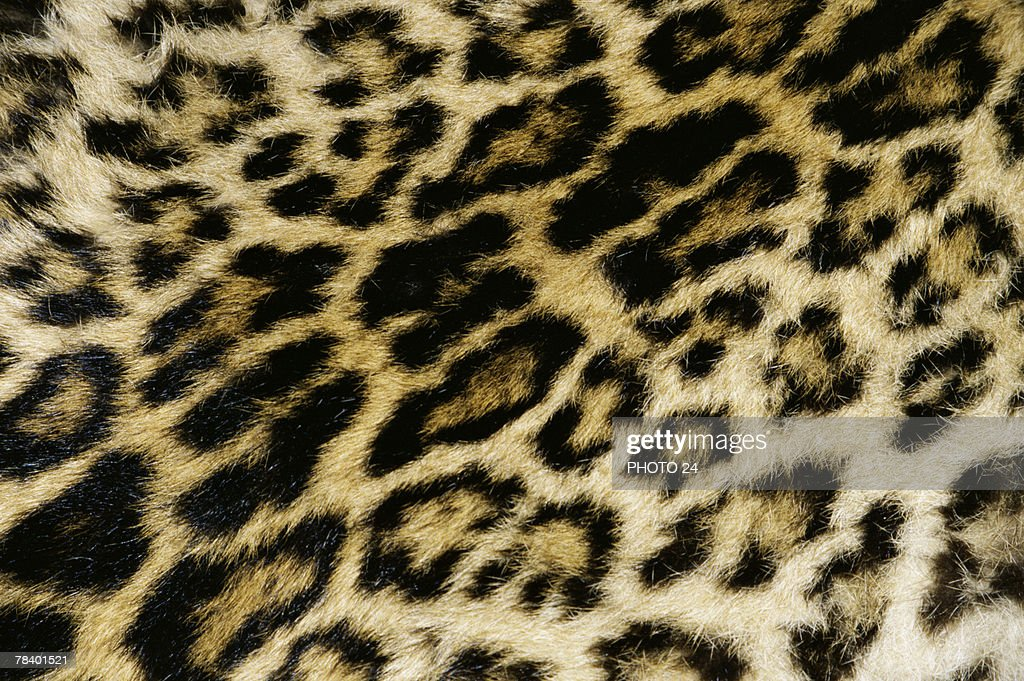 Leopard print pattern : Stock Photo
