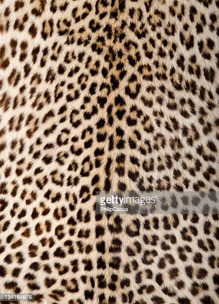 Leopard Skin/Hide