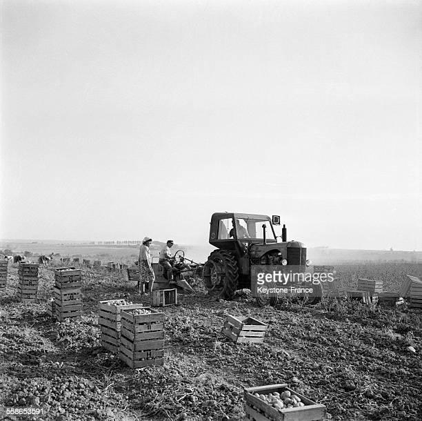 Les hommes sur les tracteurs arrachent les pommes de terre avant leur mise en cageots par les femmes à NeuillySaintFront France le 14 septembre 1959