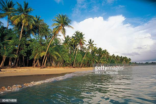 Les Salines beach with palm trees Martinique Overseas Region of France