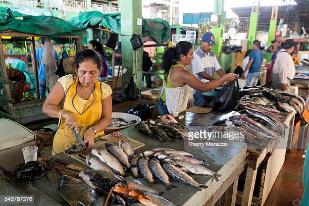 Leticia Amazonas Republic of Colombia August 6 2015 Fishwife are working in the market