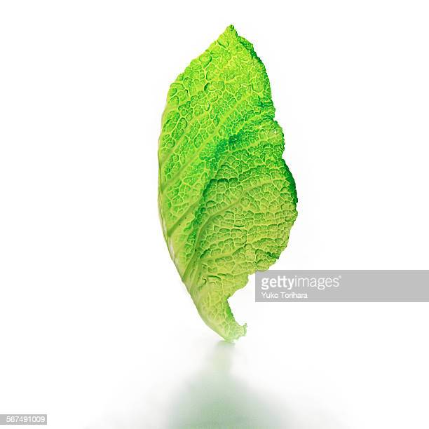 lettuce leaf in studio