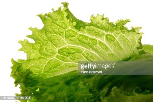 Lettuce leaf, studio shot : Stock Photo