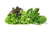 Fresh Romaine Lettuce , Cos Lettuce, Red and Green Oakleaf lettuce Vegetable salad isolated on white background.