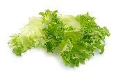 Lettuce salad  on white background
