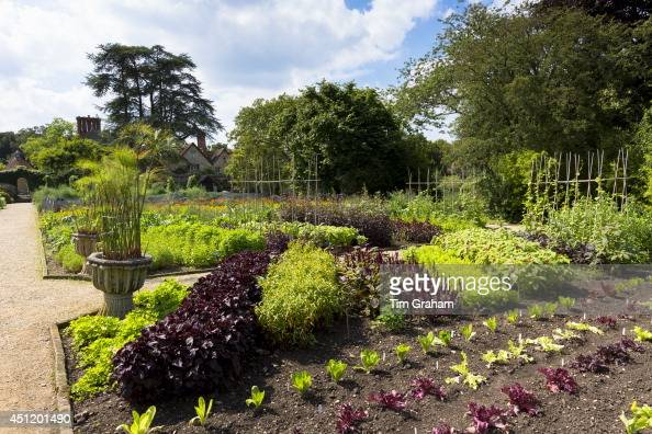 Lettuces and salad leaves at Raymond Blanc's organic vegetable and herb garden at Le Manor Aux Quat' Saisons in Oxfordshire UK