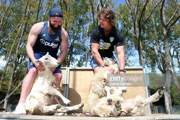 Liam Coltman and Nick Cummins pose for a photo with the sheep after taking part in a sheep shearing contest on October 20 2017 in Dunedin New Zealand
