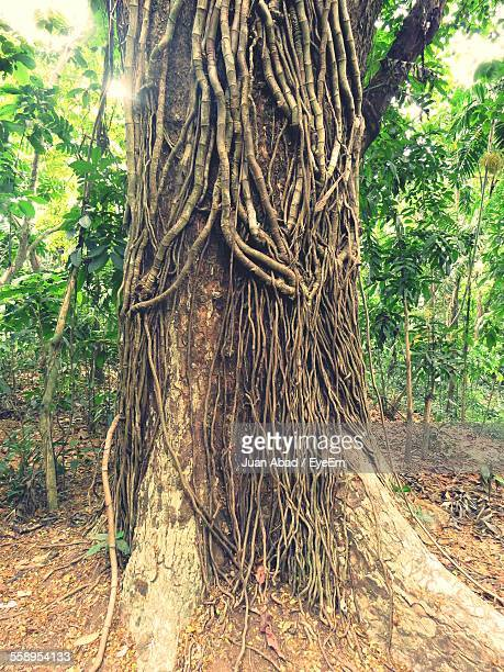 Lianas Overgrowing Tree