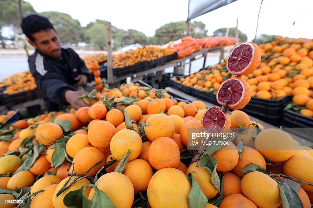 A Libyan vendor arranges his display of oranges at his stall set-up on the side of a main road in the Libyan capital Tripoli, on January 2, 2013. The winter months in Libya is when oranges are in season.