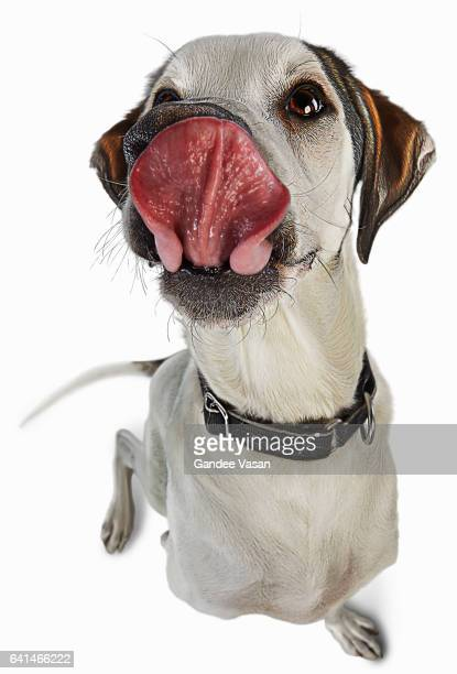 Licking Cartoon Dog