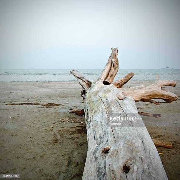 Lido-Driftwood