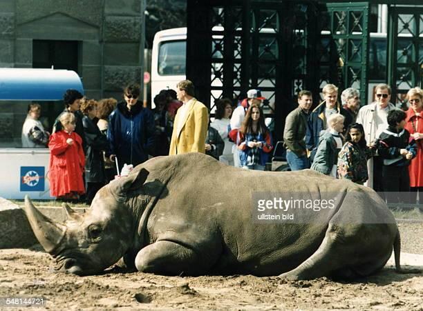 Liegendes Nashorn im Zoo Berlin und große und kleine Zuschauerinnen und Zuschauer am Ostersonntag