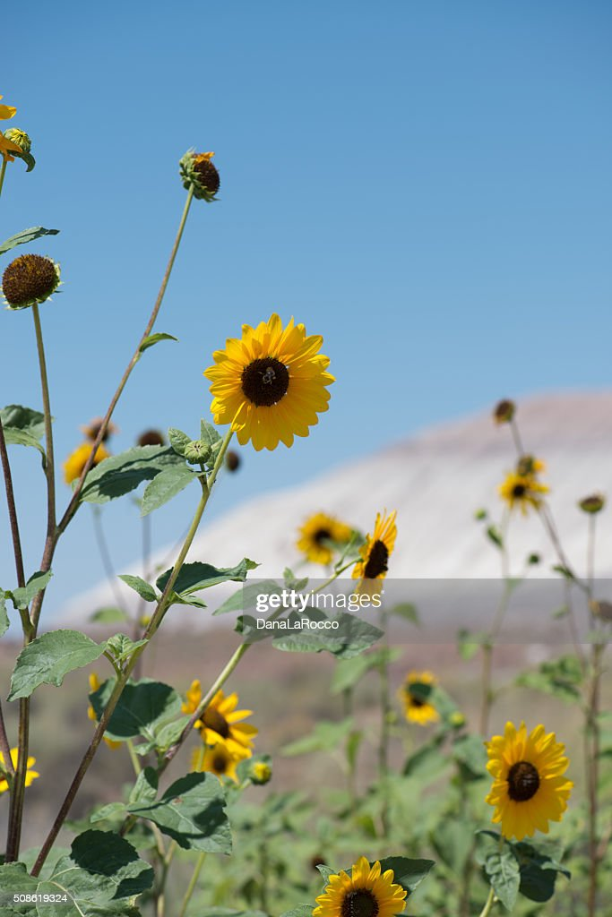 Life in Death Valley : Stock Photo