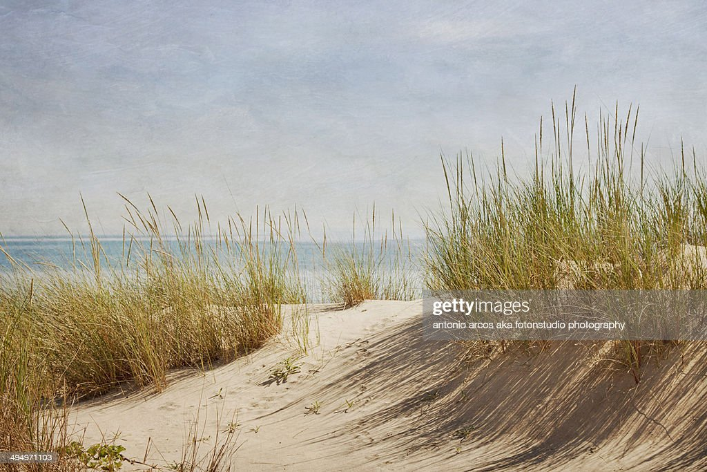 Life in the Dunes