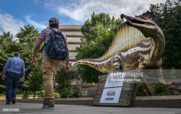 A life sized replica catches the eye of passersby as National Geographic prepares to unveil the Spinosaurus exhibit on Friday on September 2014 in...