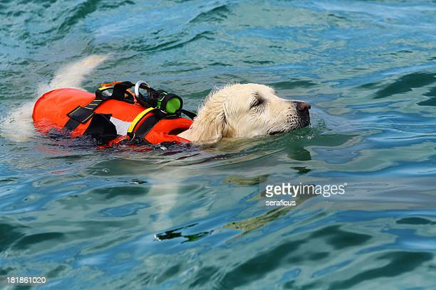 Perro de salvavidas