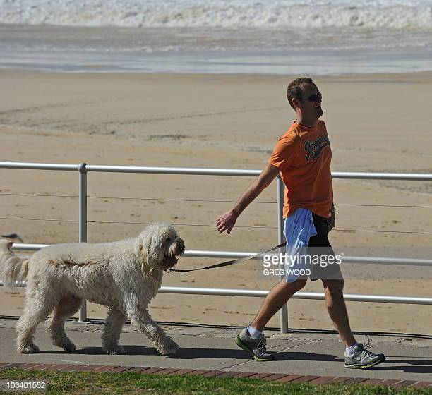 STORY 'LifestyleAustraliavoteFOCUS' by Amy Coopes A man walks his dog along the Bondi Beach promenade on August 13 2010 Australia's famously laidback...