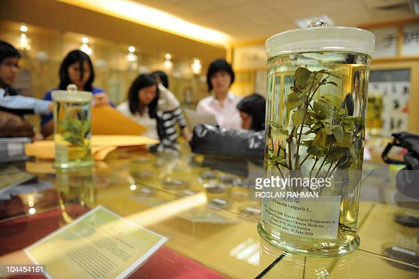 LifestyleSingaporeAsiahealthmedicine FEATURE by Bernice Han This photo taken September 6 2010 shows students and a sample of a medicinal plant called...