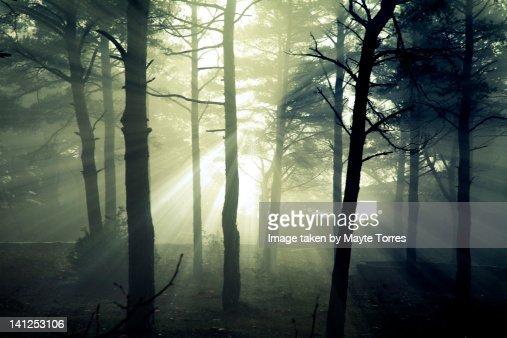 Light beams in wood : Stock Photo