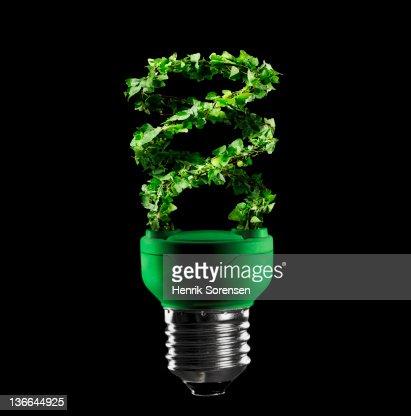 light bulb made of green leaves : Stock Photo