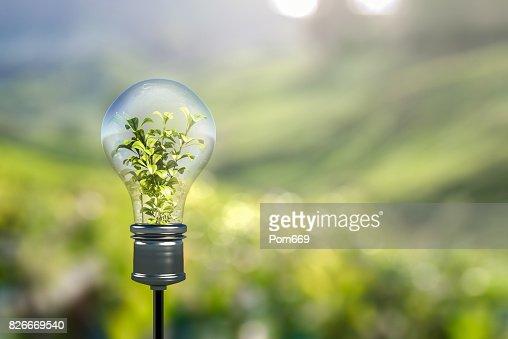 Light bulb : Foto de stock