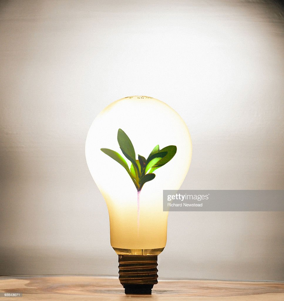 Light Bulb Sapling : Stock Photo