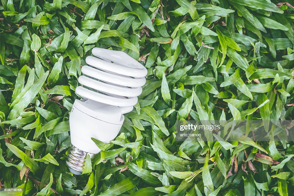 Light bulb with energy saving eco lamp : Foto stock