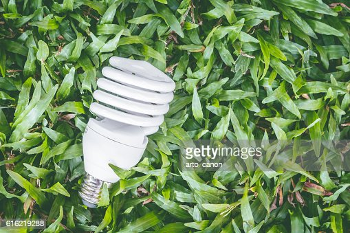 Light bulb with energy saving eco lamp : Stock Photo