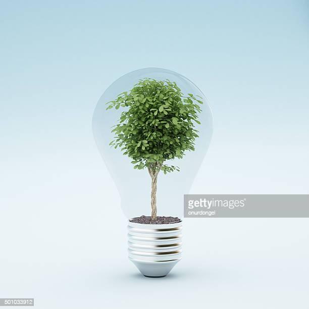 Ampoule avec plant