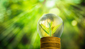 Light bulb with small plant growing inside with abstract blurred fresh green nature and bokeh background, Eco technology concepts.