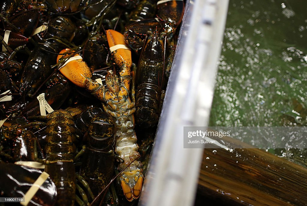 A light colored lobster is seen in a crate at New Meadows Lobster on July 21 2012 in Portland Maine A mild winter and warmer than usual spring caused...