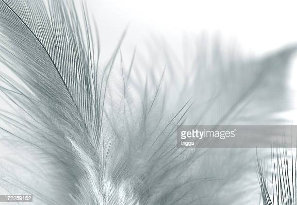 Light feathers against a white background