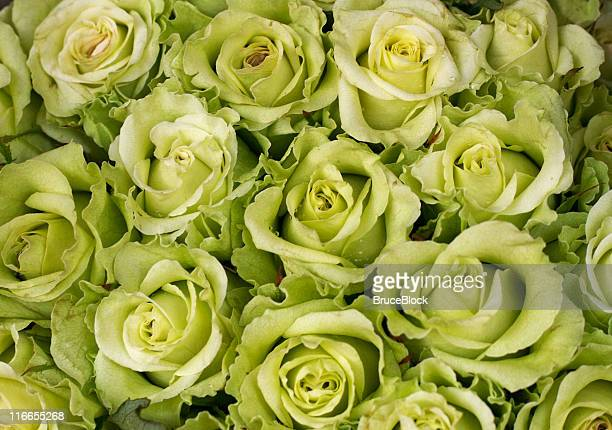 Light Green (Chartreuse) Colored Roses