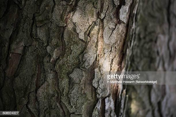 Light In Shadow (Sunlight On Tree Bark)