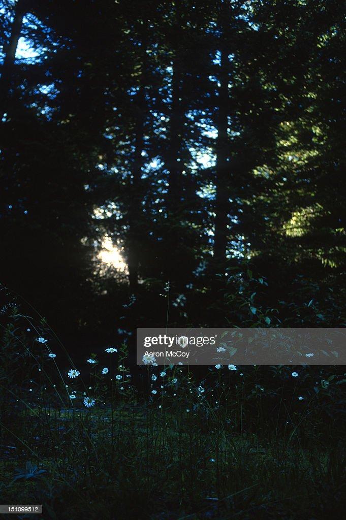 Light peers through trees hitting flowers : Stock Photo