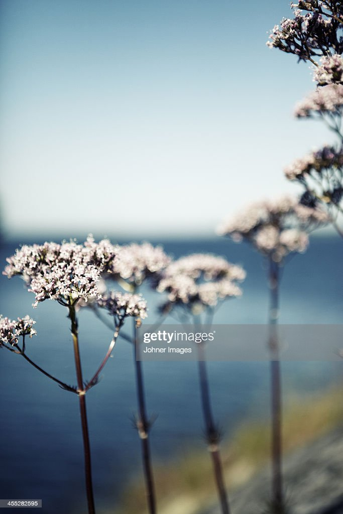 Light pink flowers : Stock Photo