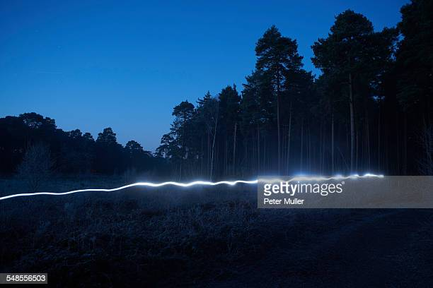 Light trail in forest, at night