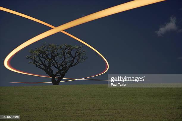 Light Trails Around Tree